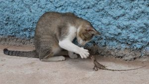 Steuernachzahlungen für die Buchung von Anzeigen auf Google - Katze spielt mit kleiner Eidechse